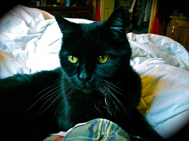 Zach's Cat Mosey