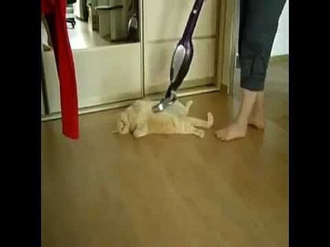 Vacuuming the Cat