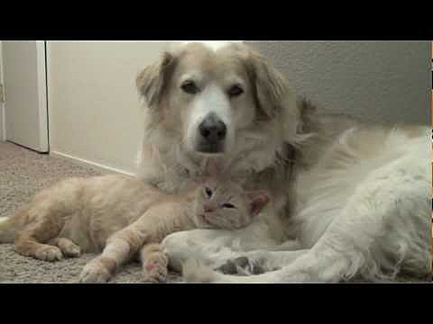 Cat Snuggles with Dog