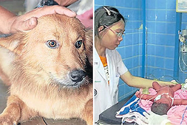 A Dog Rescues Abandoned Newborn Baby In A Garbage Dump