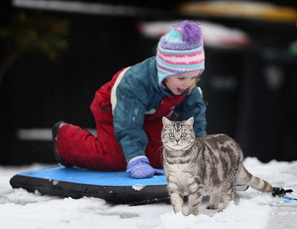 child with cat in the snow