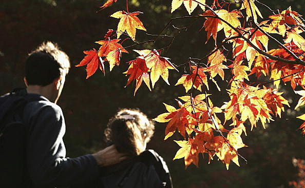 fall foliage with man and little girl