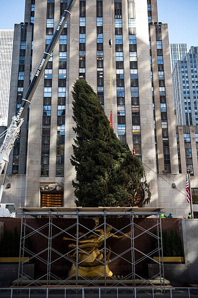 Christmas Tree being lifted at Rockefeller Center