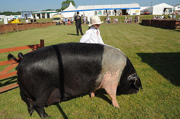 First Day Of The Great Yorkshire Show