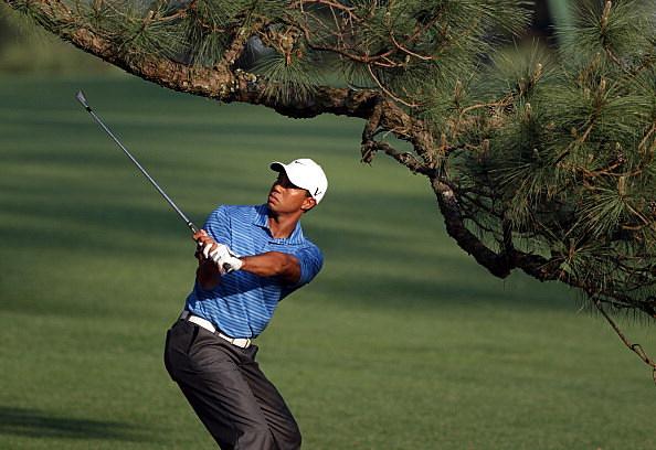Tiger Under the Eisenhower Tree